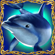 dolphins-pearl-dolphin