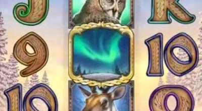 Recension av Wild North slot från Play n GO